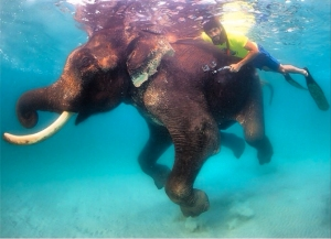 Pic 2_diving with elephant