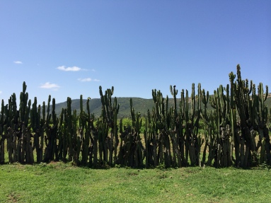 Cactus Frence